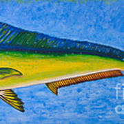 Mahi Mahi Dolphin Fish Poster