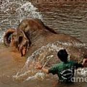 Bathing An Elephant Laos Poster