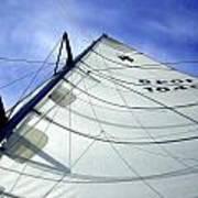 Main Sail Poster