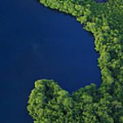 Mangrove Rhizophoraceae Stand, Bocas Poster