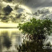 Mangroves I Poster