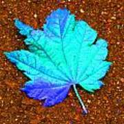 Maple Leaf On Pavement Poster