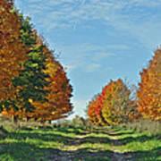 Maple Tree Lane Poster