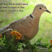 Marigold Dove With Verse Poster