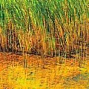 Marsh Colors  Poster