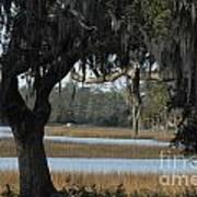 Marsh Oak Poster