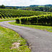 Maryland Vineyard Panorama Poster