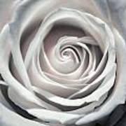 May Rose Poster