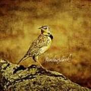 Meadowlark Poster