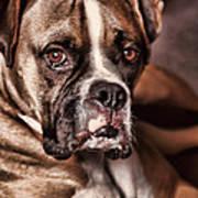 Meet Rocky Poster by Deborah Benoit