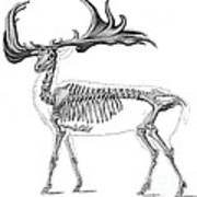 Megaloceros, Cenozoic Mammal Poster