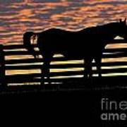 Memorial Day Weekend Sunset In Georgia - Horse - Artist Cris Hayes Poster