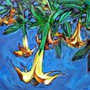 Mendocino Angel Trumpet Poster by Sheila Tajima