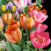 Merry Dresden Style Tulips Poster