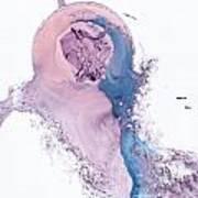 Metammorphosis 15 Poster