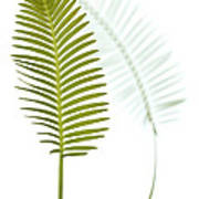 Mexican Cycad Leaf Mexico Poster