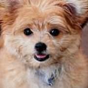 Mi-ki Puppy Poster
