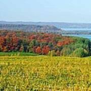 Michigan Winery Views Poster