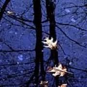 Midnight Stillness Poster