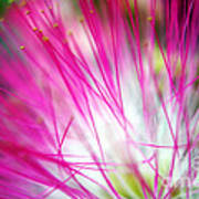 Mimosa Abstract Poster