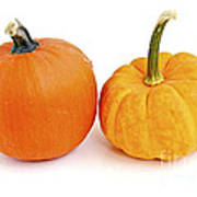 Mini Pumpkins Poster