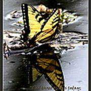 Missing You - Butterfly Poster