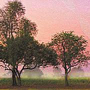 Mist Morning Sunrise Poster