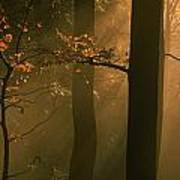 Misty Autumn Forest At Sunset Poster