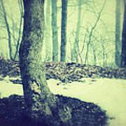 Misty Winter Woods Poster