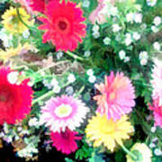 Mixed Asters Poster