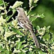 Mockingbird I Poster