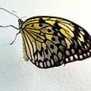 Monarch Butterflie Poster by Joyce Woodhouse