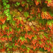 Monet Leaves Poster