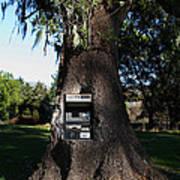 Money Tree . 7d9817 Poster