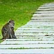 Monkey Mother With Baby Resting On A Walkway Poster