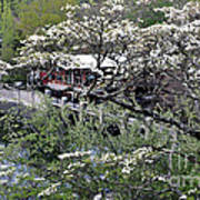 Montreat In Spring Poster