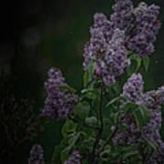 Mood Lilac Poster
