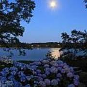 Moonlit Hydrangeas By The Se Poster