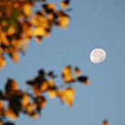 Moonset Morning Poster