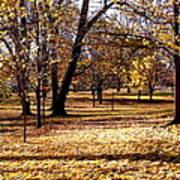 More Fall Trees Poster