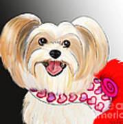 Morkie Valentine  Poster