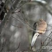 Morning Doves Poster