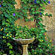 Morning Glory Garden In Provence Poster