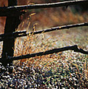 Morning Grass Poster