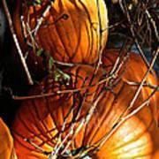 Morning Pumpkins Poster