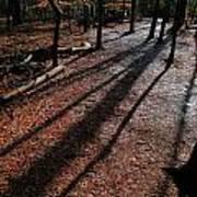 Morning Shadows Poster