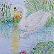 Morning Swim I  Original Colored Pencil Drawing Poster