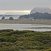 Morro Rock From The Elfin Forest Poster