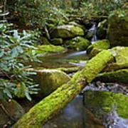 Moss Flourishing Poster