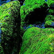Moss In Blue Poster